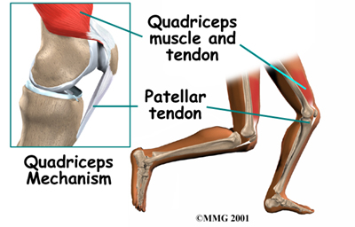 bent knee diagram wiring diagram all data Medical Diagram of Knee physical therapy in binghamton for knee patellofemoral problems foot diagram bent knee diagram