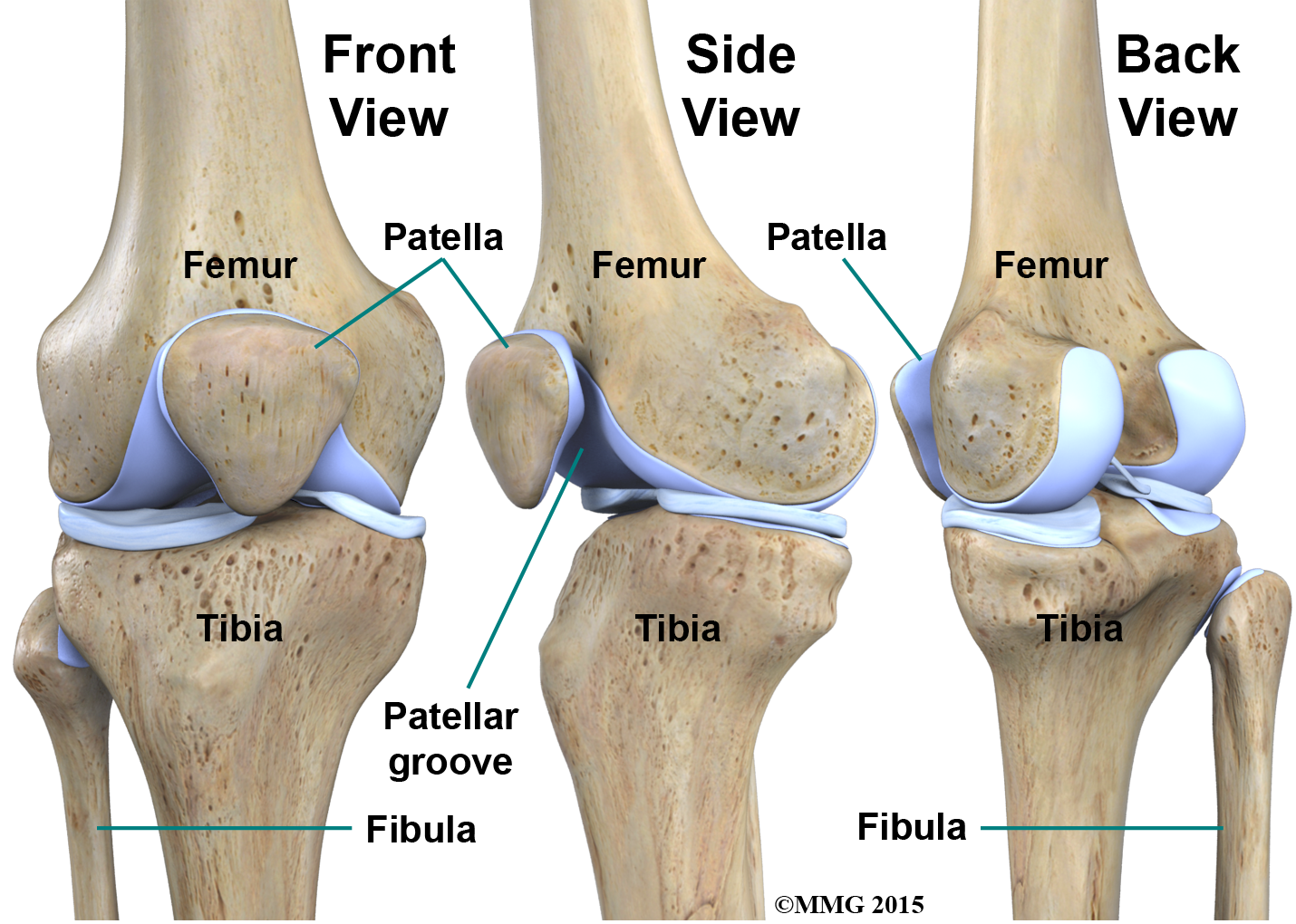 Physical Therapy In Boerne For Knee Anatomy