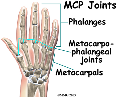 Physical Therapy In Ellenton For Hand Anatomy